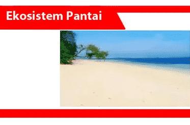 Ekosistem-pesisir-pengertian-komponen-jenis-manfaat-contoh