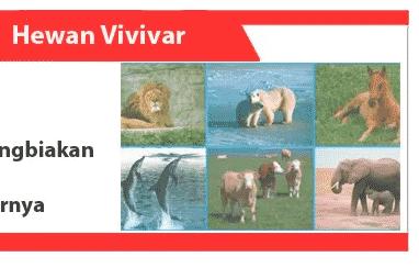 Hewan-Vivivar-definisi-karakteristik-metode-reproduksi-contoh
